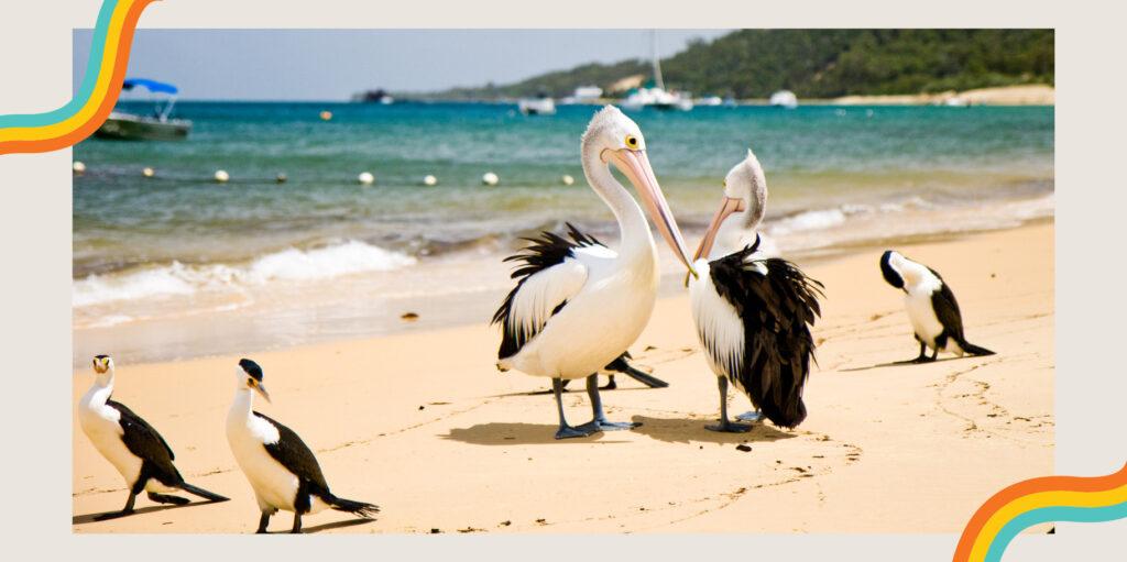 เที่ยว ทะเล ออสเตรเลีย